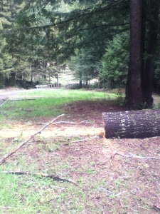 He doesn't look like much but this fallen trunk meant no way IN to the woods, which meant no way OUT.