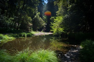 Into the Woods_Chris_Moss_Photorgraphy_River