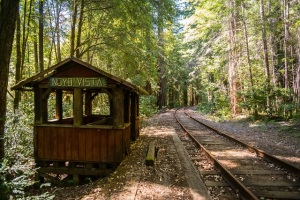 Into_the_Woods_Chris_Moss_Photography_Noyo_Vista
