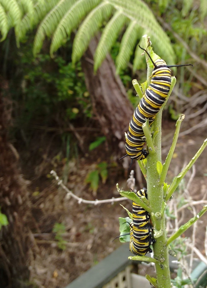 Two stalk caterpillars